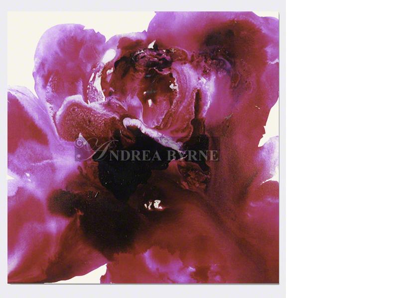 Roseberrydelicia (2006) - (36
